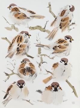 Tree Sparrows IV, Vestermarie, Bornholm